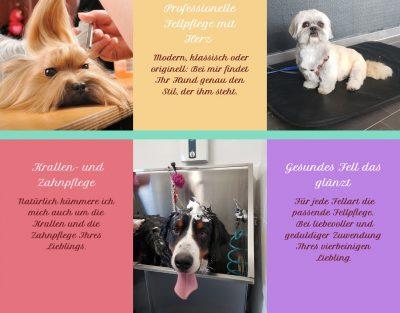 Hundestudio in Bremen – Fellomenal