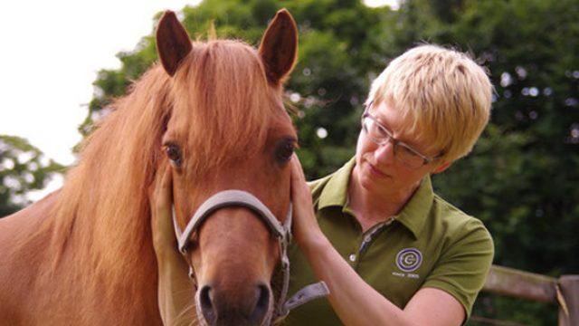 Pferdetherapie Bremen | Daniela Halbfas